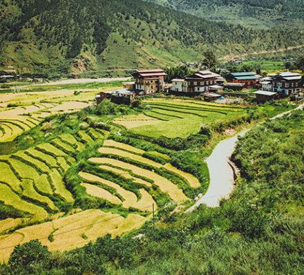 Thimphu / Punakha