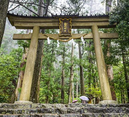 Kawayu / Kohechi Route / Kawayu