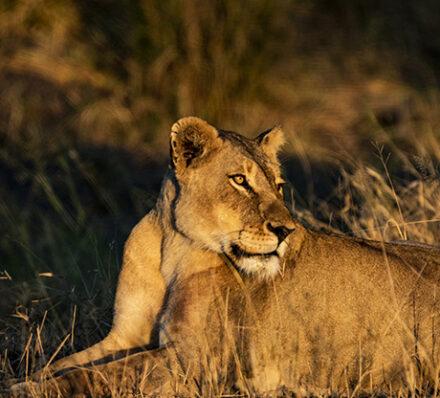 Kruger