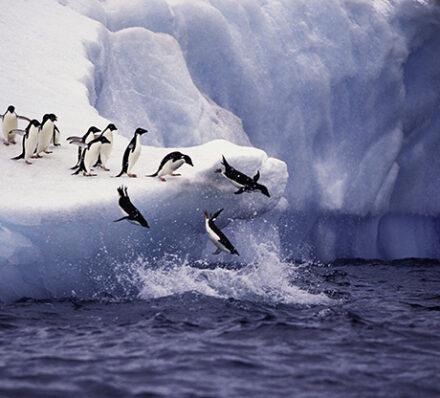 Cruise Antarctic Peninsula & South Shetland Islands