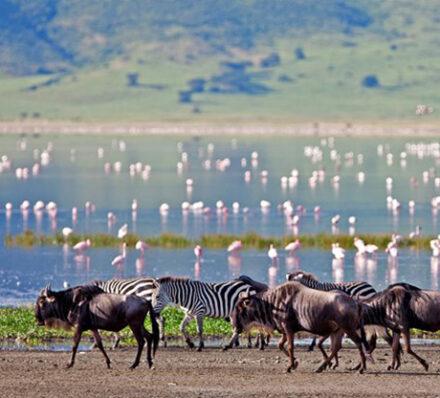 Tarangire / Ngorongoro