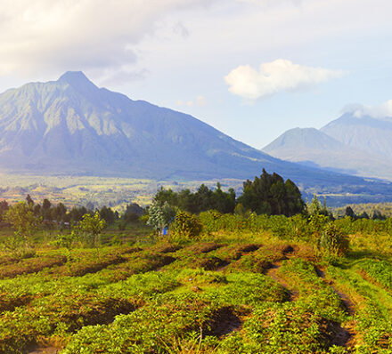Akagera NP / Volcanoes NP