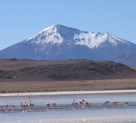 Tahua / Colchani (Uyuni) (Altitude Range 3700-4500m)
