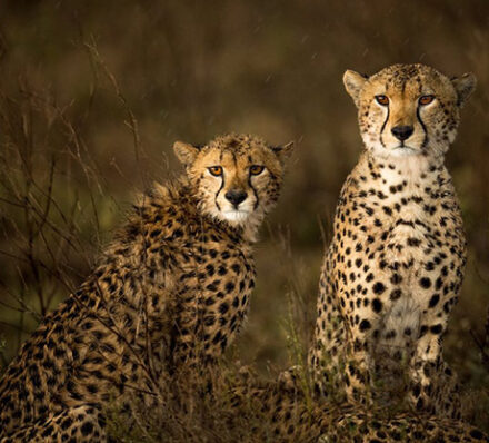 Serengeti / Departure from Arusha