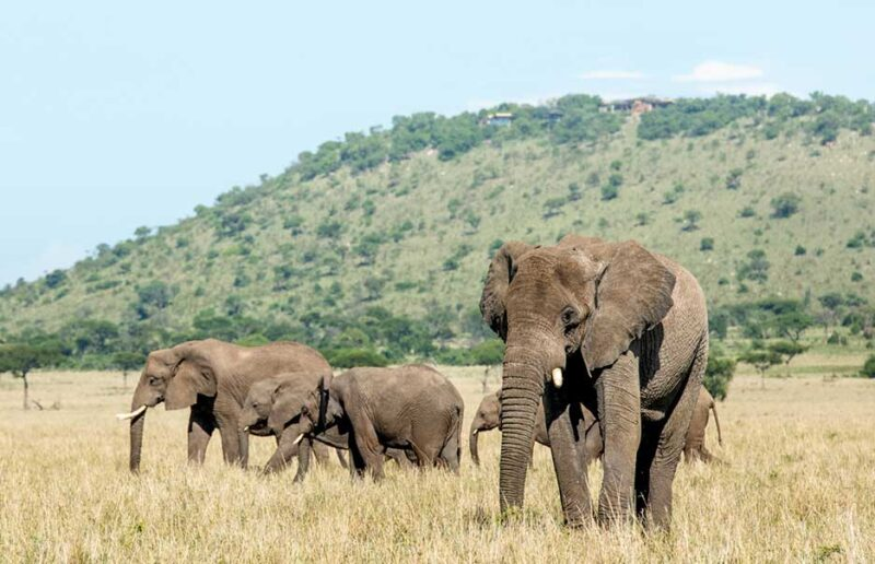 Safari with Confidence: Singita