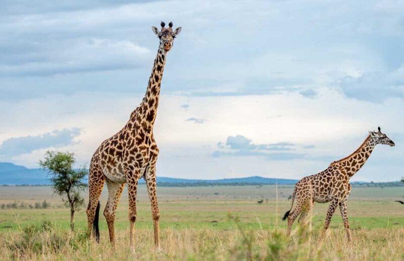 Safari with Confidence: Asilia