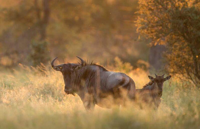 Safari with Confidence: Wilderness Safaris