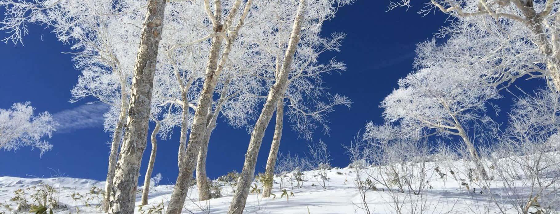 Winter Luxury Holidays