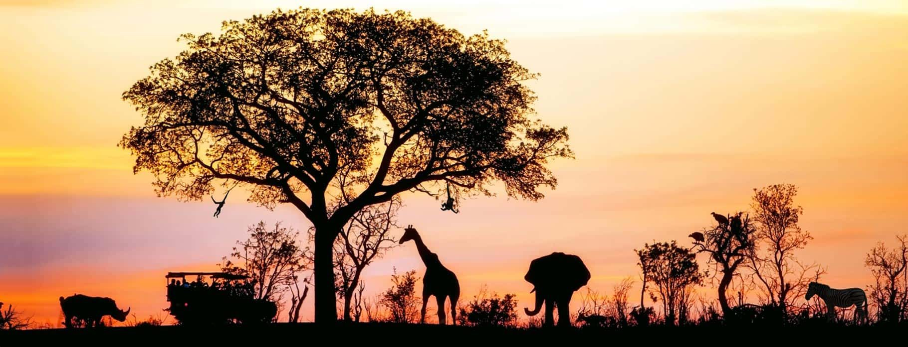 9 DAYS CLASSIC SOUTH AFRICA & VICTORIA FALLS