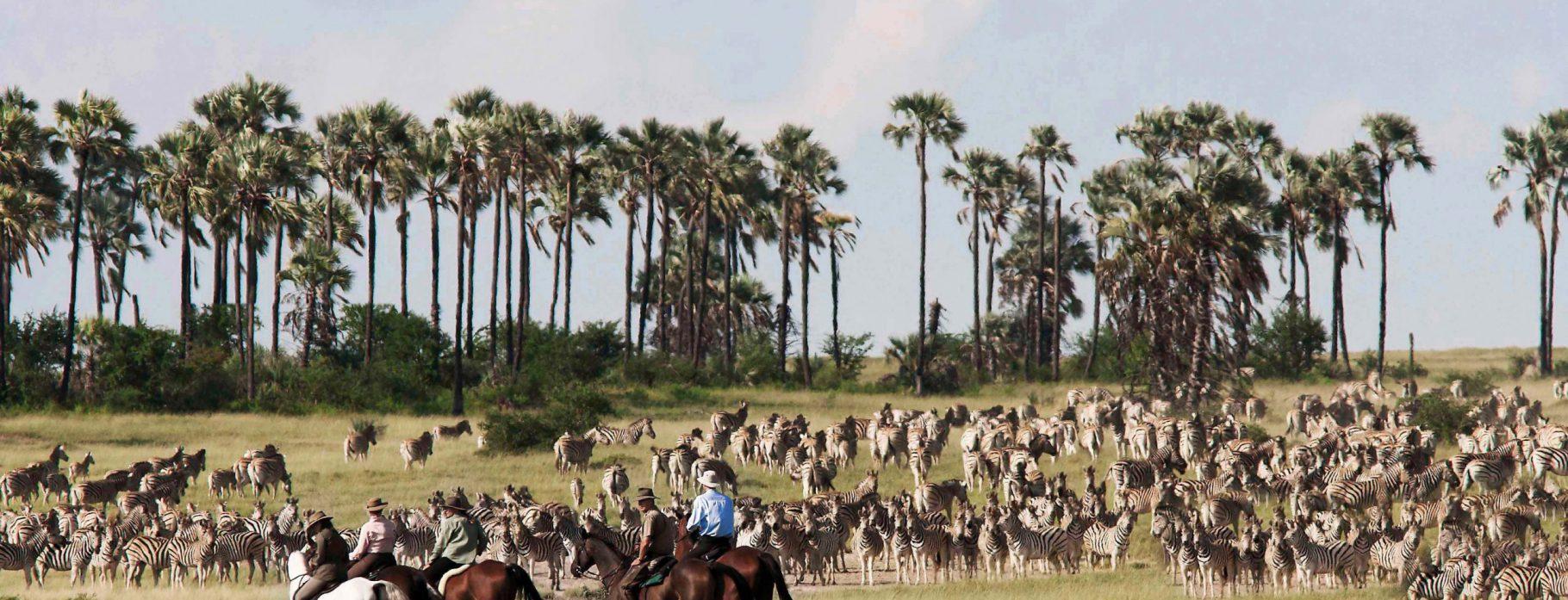11 DAYS EXCLUSIVE WINGS OVER BOTSWANA