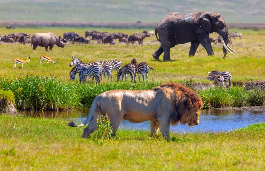 The 11 African Safari Animals you need to see with your own eyes