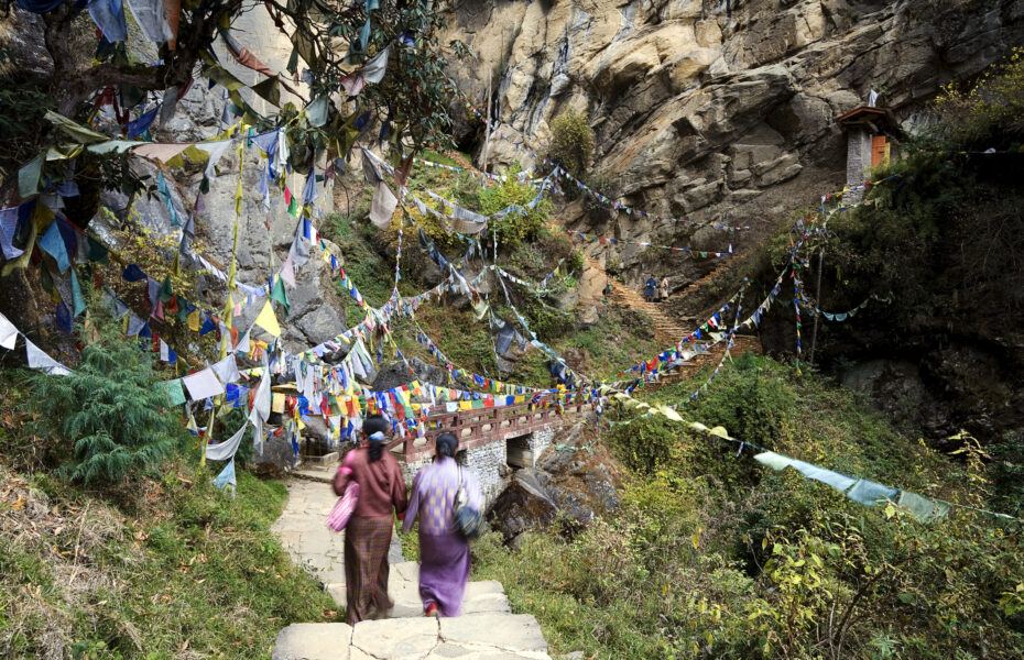 Happiest Branch in the World – Bhutan and its Trees