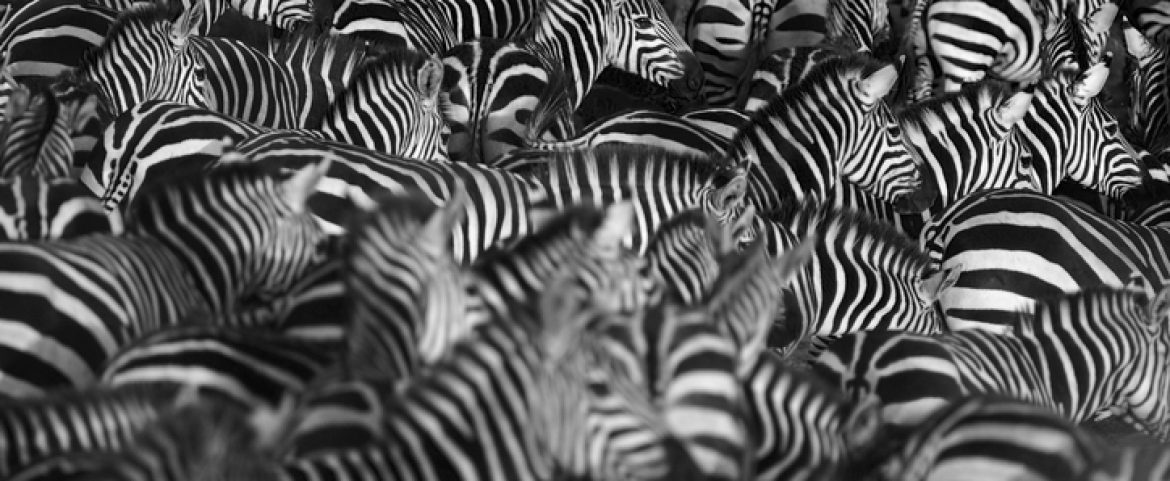 The Circle of Life: 7 Interesting Facts about Migrating Animals in Africa