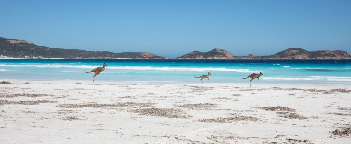 Experience the road less taken: Dusty, Pink, and Wild side of off-the-beaten Australia