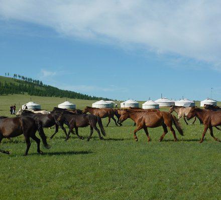 16 Jun, Thu Gobi Desert / Khan Khentii
