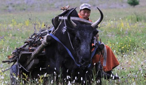 9 DAYS MONGOLIA DESERTS & MEADOWS: A NOMADIC IMMERSION (11-19 Jun 2022)